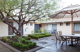 patio area outside with garden area and tree