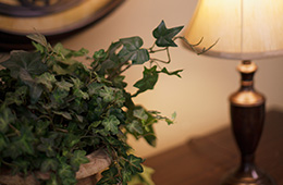 close up of a plant and lamp on a table
