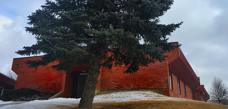 beautiful tree and building on a mildly snowy day