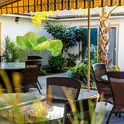 peaceful outdoor patio with many potted plants and shade umbrellas