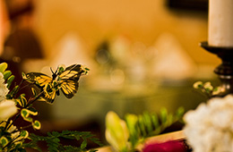 close up picture of a butterfly on some plants