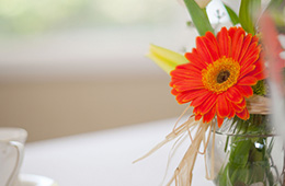 brightly colored daisy in a vase
