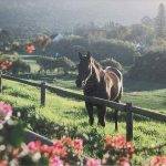 beautiful horse on a grassy hill near a fence