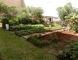 Pauahi Kupuna Hale community garden