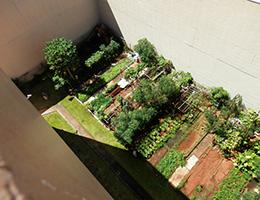 Pauahi Kupuna Hale aerial view of community garden