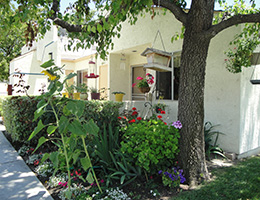 San Jacinto resident patio with sunflowers, a mature tree and a bird feeders